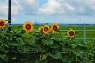花のクローズアップの写真・画像素材[3526889]