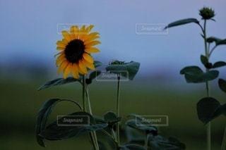 花のクローズアップの写真・画像素材[3538933]