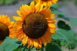 植物の色とりどりの花の写真・画像素材[3557230]