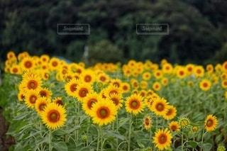 花のクローズアップの写真・画像素材[3564984]