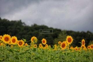 野原の花の写真・画像素材[3564988]