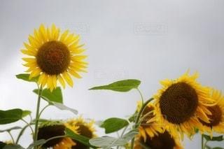 花のクローズアップの写真・画像素材[3564986]