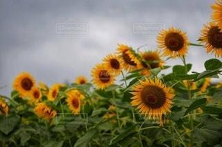 花のクローズアップの写真・画像素材[3564985]