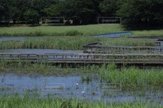 草原を流れる川の写真・画像素材[3575097]