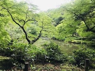 成田山で森林浴の写真・画像素材[3378557]