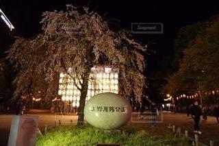 桜の写真・画像素材[3378562]