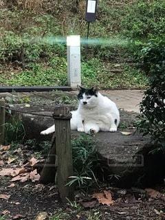 くつろぐ猫の写真・画像素材[3378588]