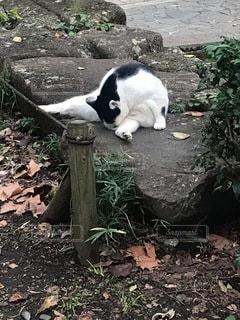 くつろぐ猫の写真・画像素材[3378580]