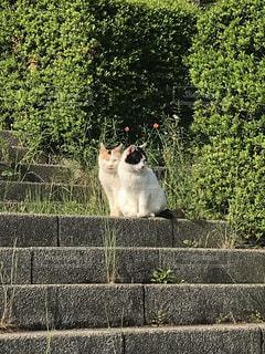 寄り添う猫の写真・画像素材[3378617]