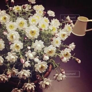 花かんざしの写真・画像素材[3378610]