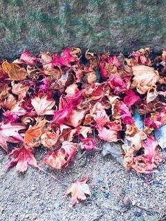 落ち葉の季節の写真・画像素材[3381844]