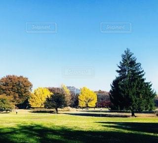 秋色の公園の写真・画像素材[3382060]