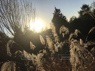 木田舎の風景の写真・画像素材[3396426]