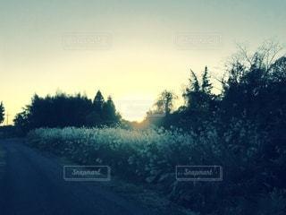 沈む夕日の写真・画像素材[3396425]