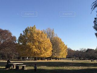 イチョウ公園の写真・画像素材[3774509]