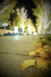 風景,建物,カメラ,夜景,大阪,綺麗,アート,景色,樹木,イルミネーション,ライトアップ,旅,イベント,クリスマス,デザイン,ツリー,Snapmart,明るい,お洒落,モニュメント,グランフロント,草木,ラグジュアリー,銀杏並木,アンバサダー,オススメ,クリスマスイルミネーション,風景写真,空間デザイン,PR,シャンパンゴールド,クリスマス ツリー,グランフロントクリスマス,Grand Wish Christmas 2020,グランフロント大坂,グランフロント大坂アンバサダー,グランフロント 北館,@grand.front.osaka,fujifilm_x_s10