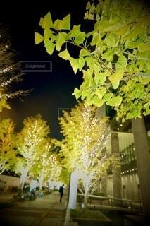 風景,建物,カメラ,夜景,大阪,綺麗,アート,樹木,イルミネーション,ライトアップ,旅,イベント,クリスマス,デザイン,ツリー,Snapmart,お洒落,モニュメント,グランフロント,草木,ラグジュアリー,銀杏並木,アンバサダー,オススメ,クリスマスイルミネーション,風景写真,空間デザイン,PR,シャンパンゴールド,クリスマス ツリー,グランフロントクリスマス,Grand Wish Christmas 2020,グランフロント大坂,グランフロント大坂アンバサダー,グランフロント 北館,@grand.front.osaka,fujifilm_x_s10