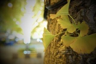 風景,建物,秋,カメラ,夜景,屋外,大阪,綺麗,水面,アート,葉,景色,樹木,イルミネーション,ライトアップ,旅,イベント,クリスマス,デザイン,ツリー,Snapmart,お洒落,モニュメント,グランフロント,草木,ラグジュアリー,銀杏並木,アンバサダー,オススメ,クリスマスイルミネーション,風景写真,空間デザイン,PR,シャンパンゴールド,クリスマス ツリー,グランフロントクリスマス,Grand Wish Christmas 2020,グランフロント大坂,グランフロント大坂アンバサダー,グランフロント 北館,@grand.front.osaka,fujifilm_x_s10