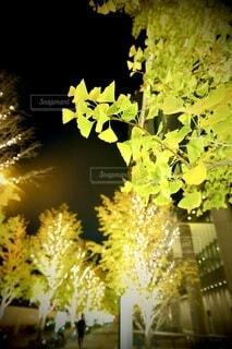 風景,建物,秋,カメラ,夜景,屋外,大阪,綺麗,水面,アート,樹木,イルミネーション,ライトアップ,旅,イベント,クリスマス,デザイン,ツリー,Snapmart,明るい,お洒落,モニュメント,グランフロント,草木,ラグジュアリー,銀杏並木,アンバサダー,オススメ,クリスマスイルミネーション,風景写真,空間デザイン,PR,シャンパンゴールド,クリスマス ツリー,グランフロントクリスマス,Grand Wish Christmas 2020,グランフロント大坂,グランフロント大坂アンバサダー,グランフロント 北館,@grand.front.osaka,fujifilm_x_s10
