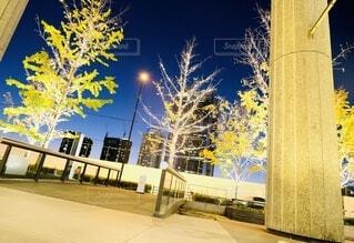 風景,空,建物,秋,カメラ,夜景,屋外,大阪,綺麗,水面,アート,樹木,イルミネーション,ライトアップ,旅,イベント,クリスマス,デザイン,ツリー,Snapmart,お洒落,モニュメント,グランフロント,草木,ラグジュアリー,銀杏並木,アンバサダー,オススメ,クリスマスイルミネーション,風景写真,空間デザイン,PR,シャンパンゴールド,クリスマス ツリー,グランフロントクリスマス,Grand Wish Christmas 2020,グランフロント大坂,グランフロント大坂アンバサダー,グランフロント 北館,@grand.front.osaka,fujifilm_x_s10