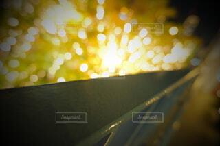 風景,建物,秋,カメラ,夜景,屋外,大阪,綺麗,水面,アート,ぼかし,樹木,イルミネーション,ライトアップ,旅,イベント,クリスマス,デザイン,ツリー,Snapmart,明るい,お洒落,モニュメント,グランフロント,草木,ラグジュアリー,銀杏並木,アンバサダー,オススメ,クリスマスイルミネーション,風景写真,ぼやける,空間デザイン,PR,シャンパンゴールド,クリスマス ツリー,グランフロントクリスマス,Grand Wish Christmas 2020,グランフロント大坂,グランフロント大坂アンバサダー,グランフロント 北館,@grand.front.osaka,fujifilm_x_s10
