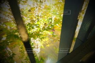 風景,建物,秋,カメラ,夜景,屋外,大阪,綺麗,水面,アート,樹木,イルミネーション,ライトアップ,旅,イベント,クリスマス,デザイン,ツリー,Snapmart,お洒落,モニュメント,グランフロント,草木,ラグジュアリー,銀杏並木,アンバサダー,オススメ,クリスマスイルミネーション,風景写真,空間デザイン,PR,シャンパンゴールド,クリスマス ツリー,グランフロントクリスマス,Grand Wish Christmas 2020,グランフロント大坂,グランフロント大坂アンバサダー,グランフロント 北館,@grand.front.osaka,fujifilm_x_s10
