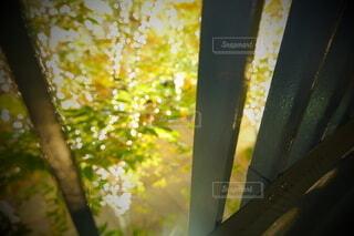 風景,建物,秋,カメラ,夜景,屋外,大阪,綺麗,水面,アート,葉,樹木,イルミネーション,ライトアップ,旅,イベント,クリスマス,デザイン,ツリー,Snapmart,お洒落,モニュメント,グランフロント,草木,ラグジュアリー,銀杏並木,アンバサダー,オススメ,クリスマスイルミネーション,風景写真,空間デザイン,PR,シャンパンゴールド,クリスマス ツリー,グランフロントクリスマス,Grand Wish Christmas 2020,グランフロント大坂,グランフロント大坂アンバサダー,グランフロント 北館,@grand.front.osaka,fujifilm_x_s10