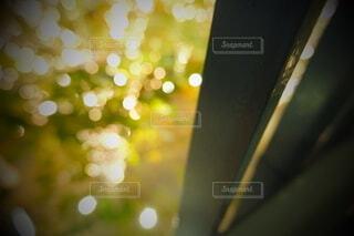 風景,建物,秋,カメラ,夜景,屋外,大阪,綺麗,水面,アート,景色,ぼかし,樹木,イルミネーション,ライトアップ,旅,イベント,クリスマス,デザイン,ツリー,Snapmart,明るい,お洒落,モニュメント,グランフロント,草木,ラグジュアリー,銀杏並木,アンバサダー,オススメ,クリスマスイルミネーション,風景写真,空間デザイン,PR,シャンパンゴールド,クリスマス ツリー,グランフロントクリスマス,Grand Wish Christmas 2020,グランフロント大坂,グランフロント大坂アンバサダー,グランフロント 北館,@grand.front.osaka,fujifilm_x_s10