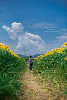 向日葵との写真・画像素材[3541499]