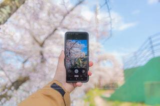 風景,花,春,桜,手,スマホ,手持ち,人物,人,ポートレート,ライフスタイル,手元,日中,携帯電話