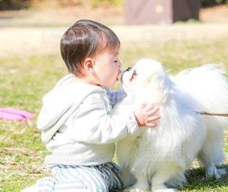 草の中に立っている小さな男の子の写真・画像素材[3379190]