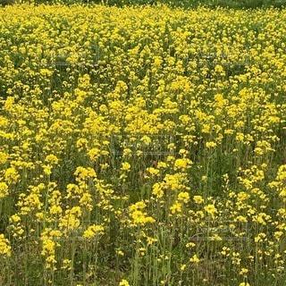野原の花の写真・画像素材[3376275]