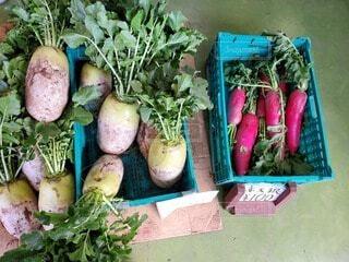 食べ物,赤,白,野菜,食品,大根,食材,フレッシュ,ベジタブル,朝採り,三浦,三浦大根