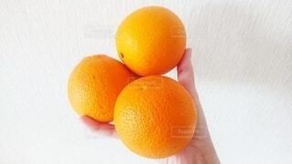 食べ物,夏,冬,黄色,オレンジ,手持ち,果物,人物,みかん,ポートレート,3つ,オレンジ色,橙,ライフスタイル,手元,柑橘類,皮,橙色,3個,柑橘系,ネーブルオレンジ,バレンシアオレンジ