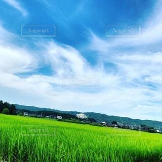 緑の稲穂と夏の空の写真・画像素材[3378901]