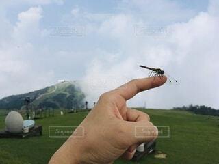 空,指,手持ち,人物,手乗り,トンボ,山頂,ポートレート,ハイキング,琵琶湖,ライフスタイル,山登り,手元,とんぼ