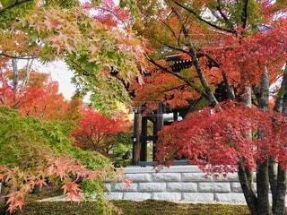 京都の紅葉 2の写真・画像素材[3718225]