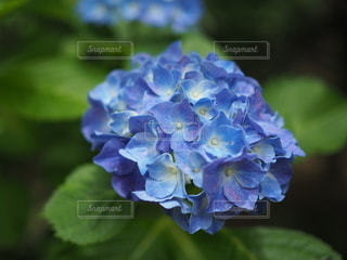 花のクローズアップの写真・画像素材[3380178]