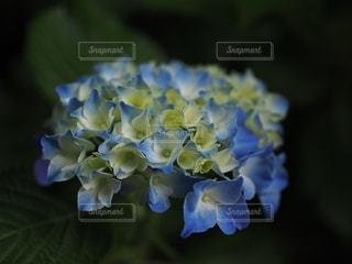 花のクローズアップの写真・画像素材[3380179]