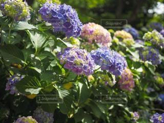 花園のクローズアップの写真・画像素材[3380177]