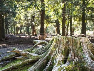奈良公園の鹿の写真・画像素材[3380482]