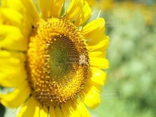 花のクローズアップの写真・画像素材[3380483]