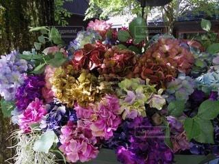 紫陽花で満たされた傘の写真・画像素材[3380576]