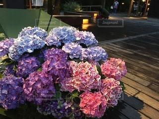 花のクローズアップの写真・画像素材[3380577]