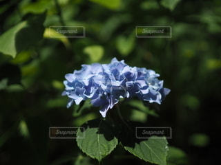 花のクローズアップの写真・画像素材[3382875]