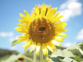 花のクローズアップの写真・画像素材[3495027]