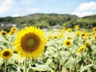 花のクローズアップの写真・画像素材[3495028]