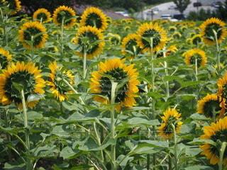 花のクローズアップの写真・画像素材[3526082]