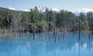 水の体の隣にある木の写真・画像素材[3383711]