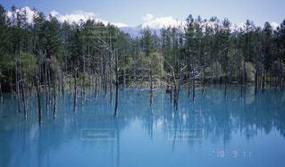 青い池の写真・画像素材[3383713]
